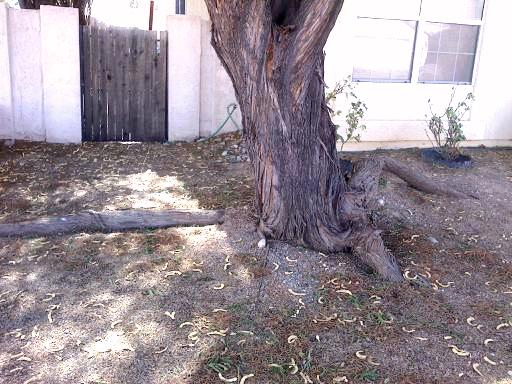 How To Trim Large Tree Branches  Todays Homeowner